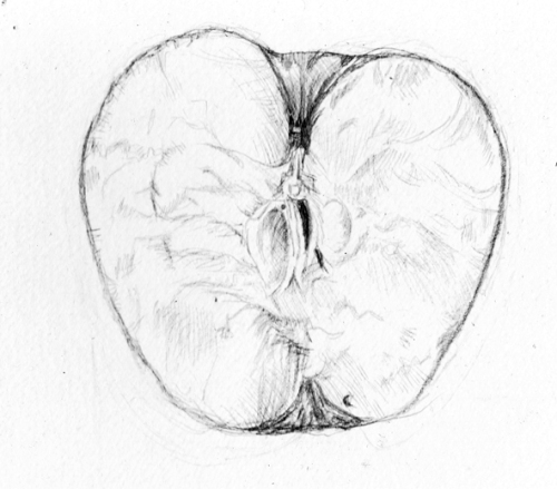 Drawing of half an apple showing the inside.