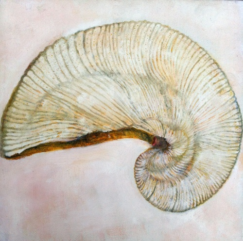 Fossil Oyster