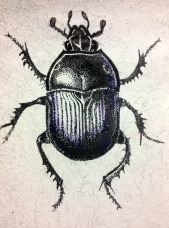 Dor beetle on handmade paper
