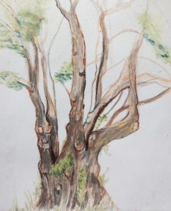 Sketch of the Alder tree done in the rain
