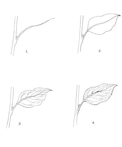 leavediagramcomplete